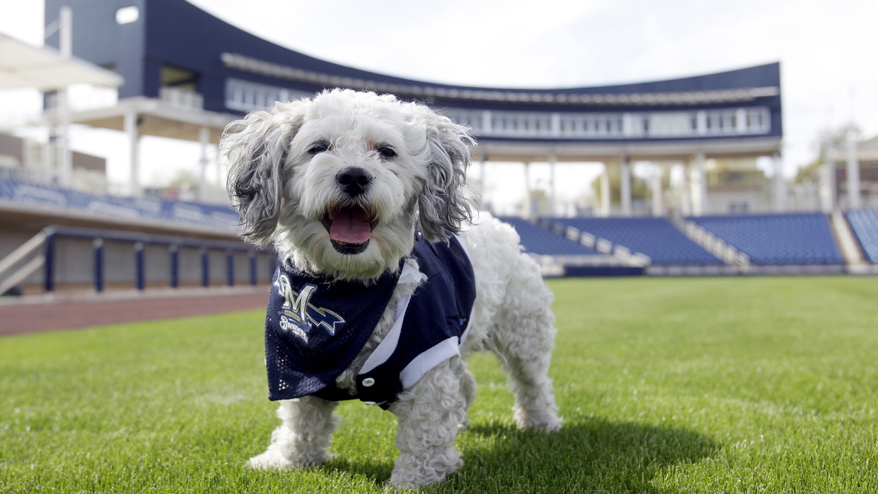 Last Call: Brewers' ballpark pup returns to his roots